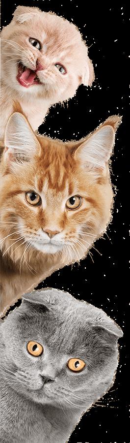 ADOPT | Spartanburg Humane Society